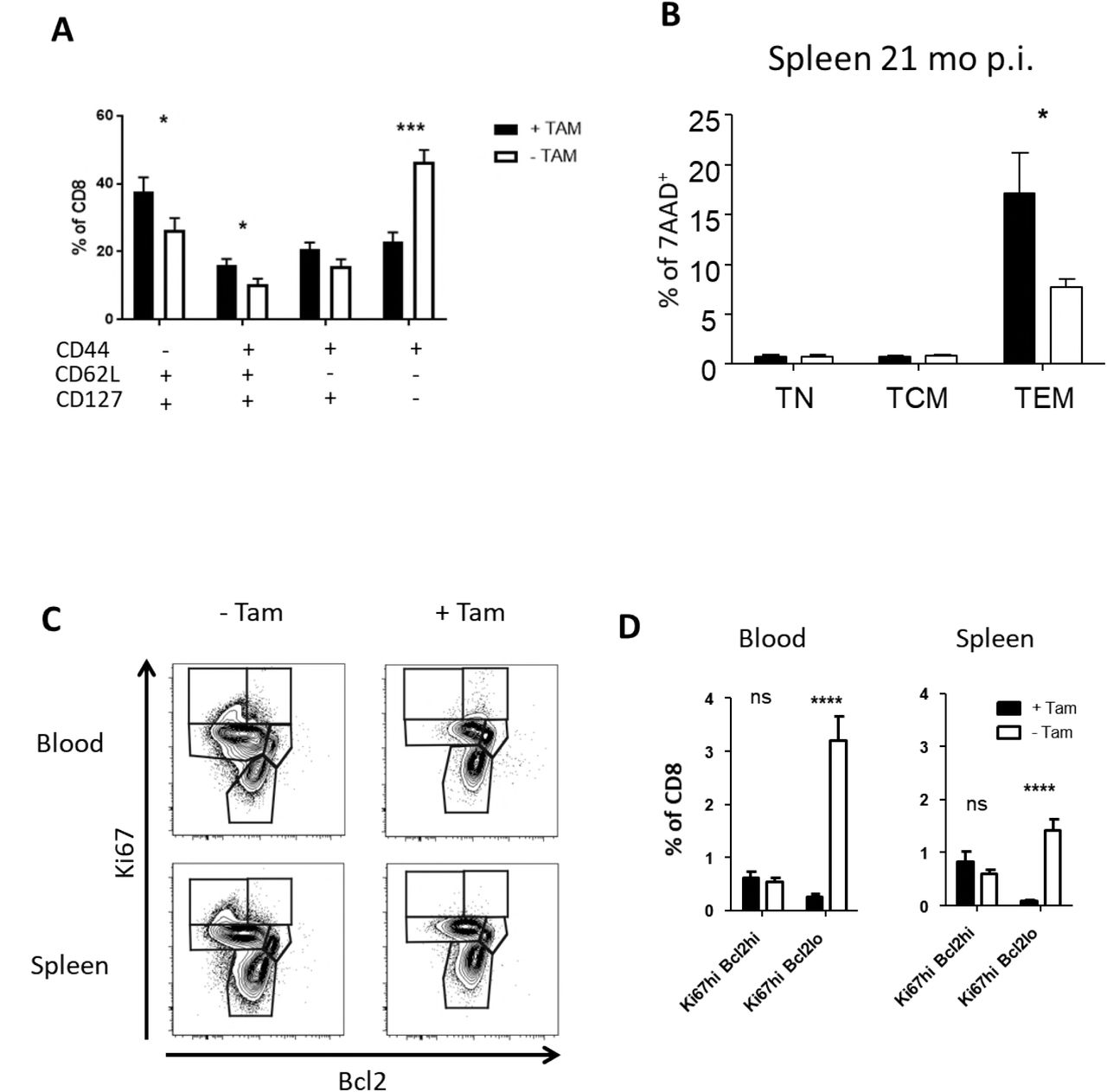 MCMV-specific CD8 T-cells are depleted by Tamoxifen treatment in R26 CreER T2 mice. (A, B) R26CreER T2 mice were infected with 10 6 PFU MCMV or 200μl PBS (mock). 60 days post infection mice received food pellets with 400 mg/kg Tamoxifen for 4 weeks (indicated by the grey rectangle). Blood was collected and analysed at 0, 7, 14, 28, 60, 90, 120, 150, 180, and 270 dpi. Blood leukocytes were stimulated with the M38 peptide (SSPPMFRV) or the gB peptide (SSIEFARL) and stained for CD8, CD44, CD127, and IFNy expression. (A) Kinetic of M38-specific CD8 T-cells before, during, and after Tamoxifen treatment. (B) Kinetic of gB-specific CD8 T-cells before, during, and after Tamoxifen treatment. Data are pooled from three independent experiments with up to 15 mice per group in total. Error bars indicate SEM. Significance was assessed by Mann-Whitney test. ** p