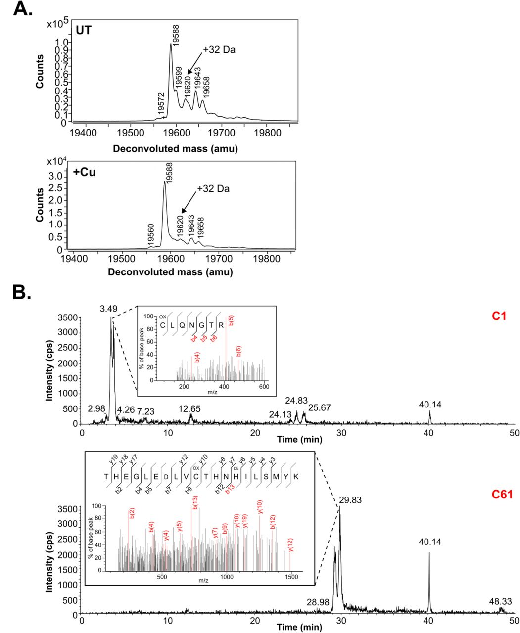 Spliceosomal Prp8 intein at the crossroads of protein and