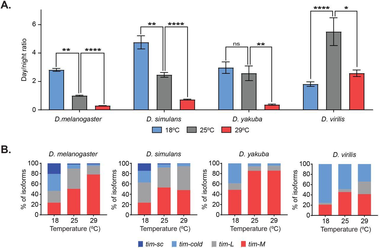 Thermosensitive alternative splicing senses and mediates temperature