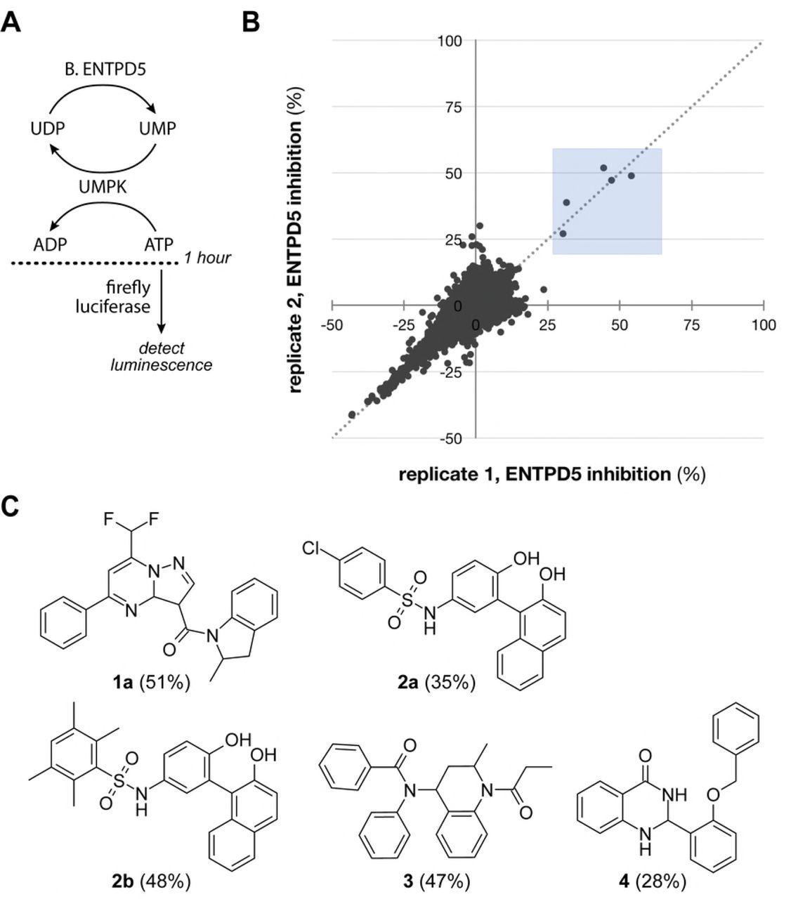 Identifying small molecule probes of ENTPD5 through high throughput