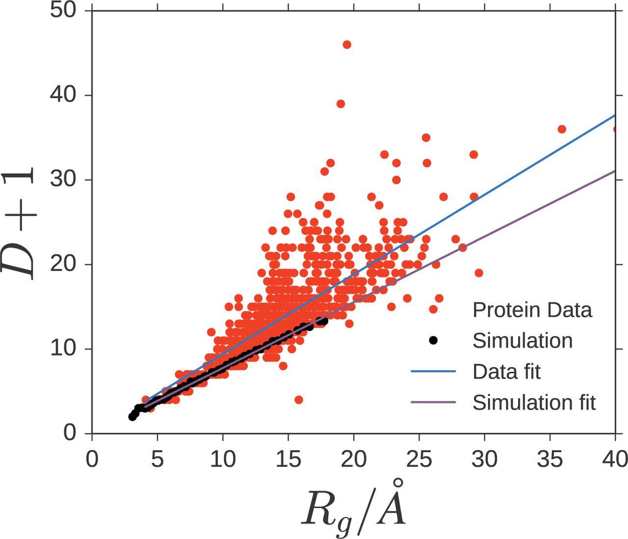Geometric constraints in protein folding | bioRxiv