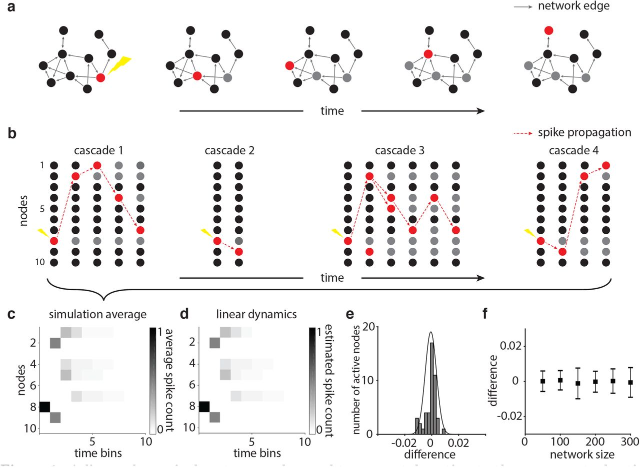 Network topology of neural systems supporting avalanche dynamics