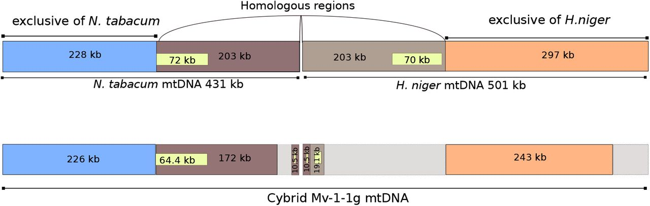 Elucidating genomic patterns and recombination events in plant