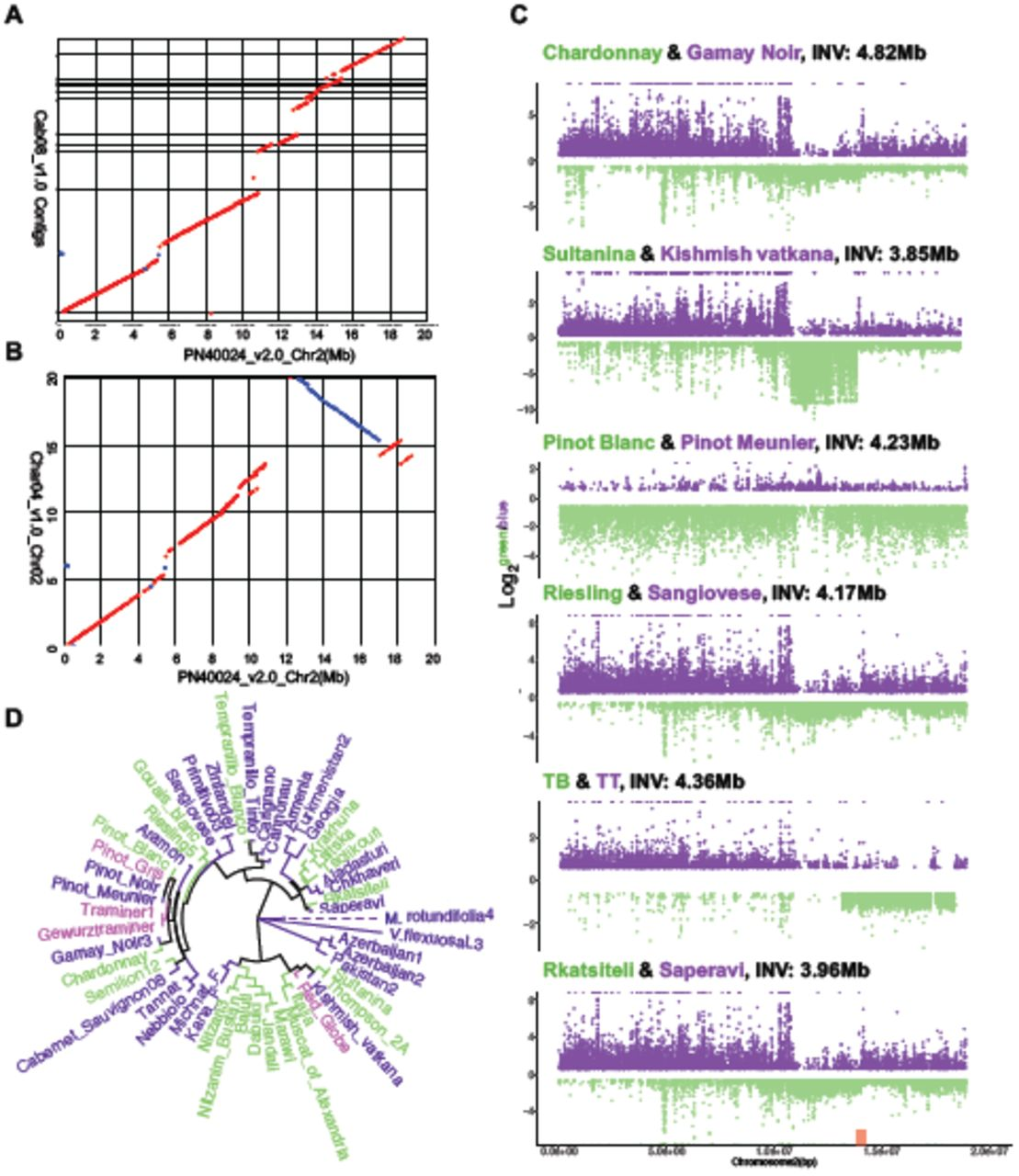 Structural variants, clonal propagation, and genome evolution in