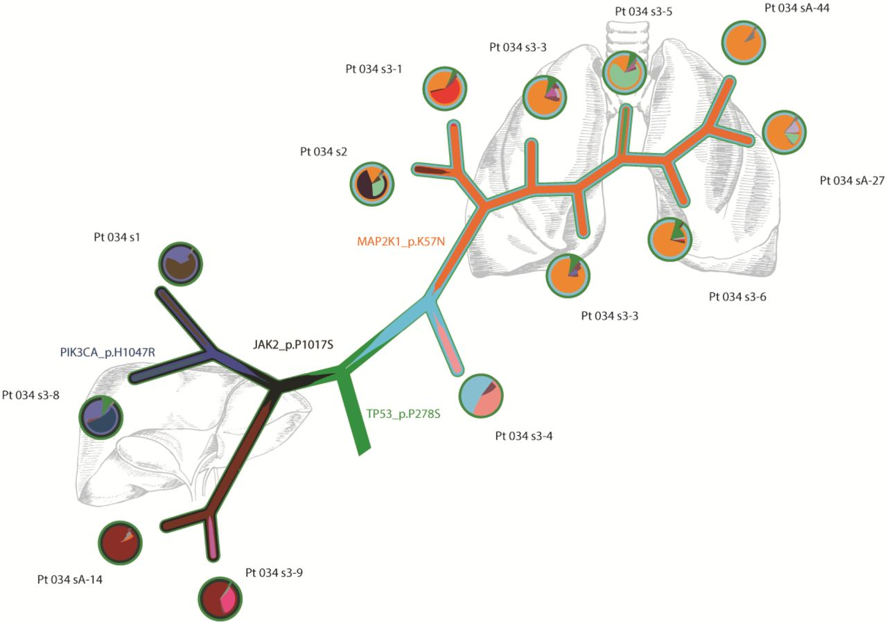Comprehensive analysis of tumour initiation, spatial and