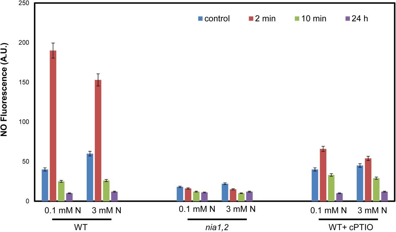 Trichoderma asperelloides enhances local (LAR) and systemic