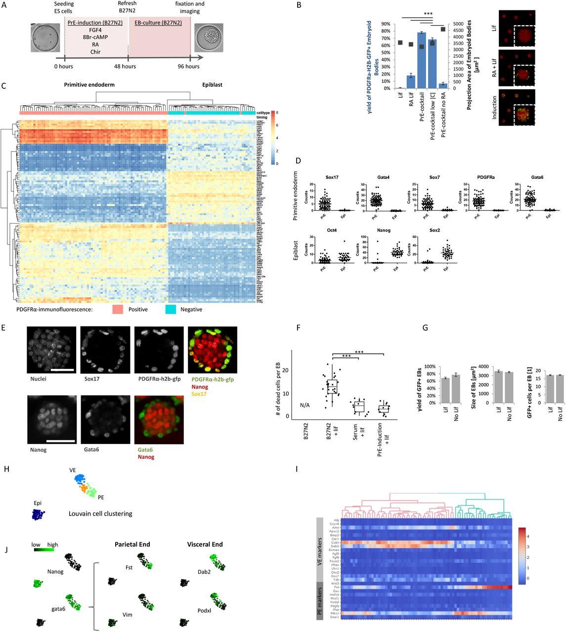 Self-organization of post-implantation-like embryonic