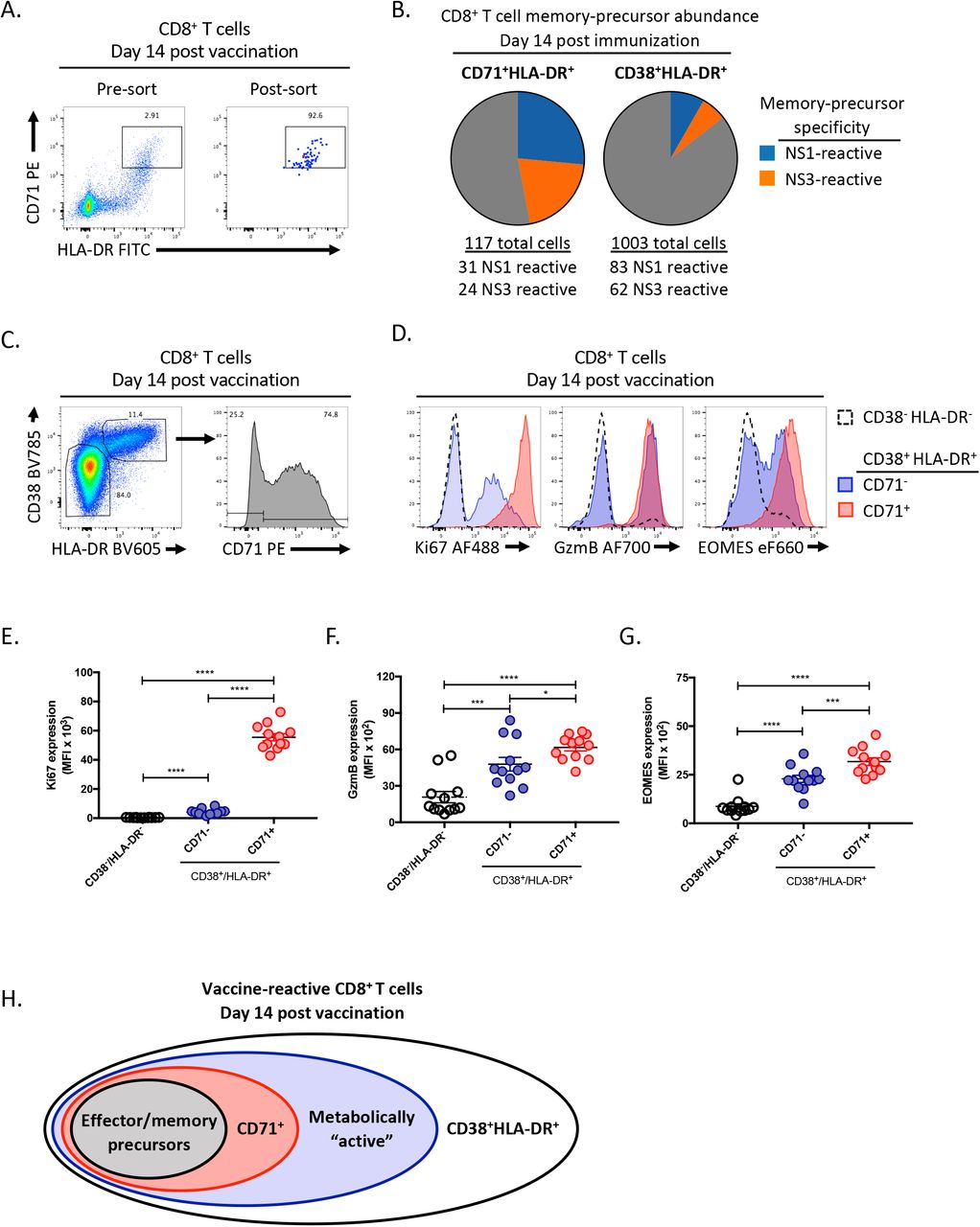 Dissecting the heterogeneity of DENV vaccine-elicited cellular