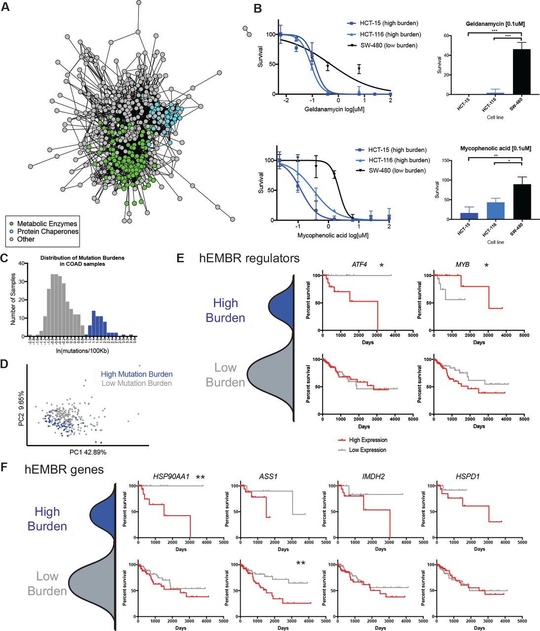 a stress response that allows highly mutated eukaryotic calcium mechanism of action higher rates of electrical stimulation