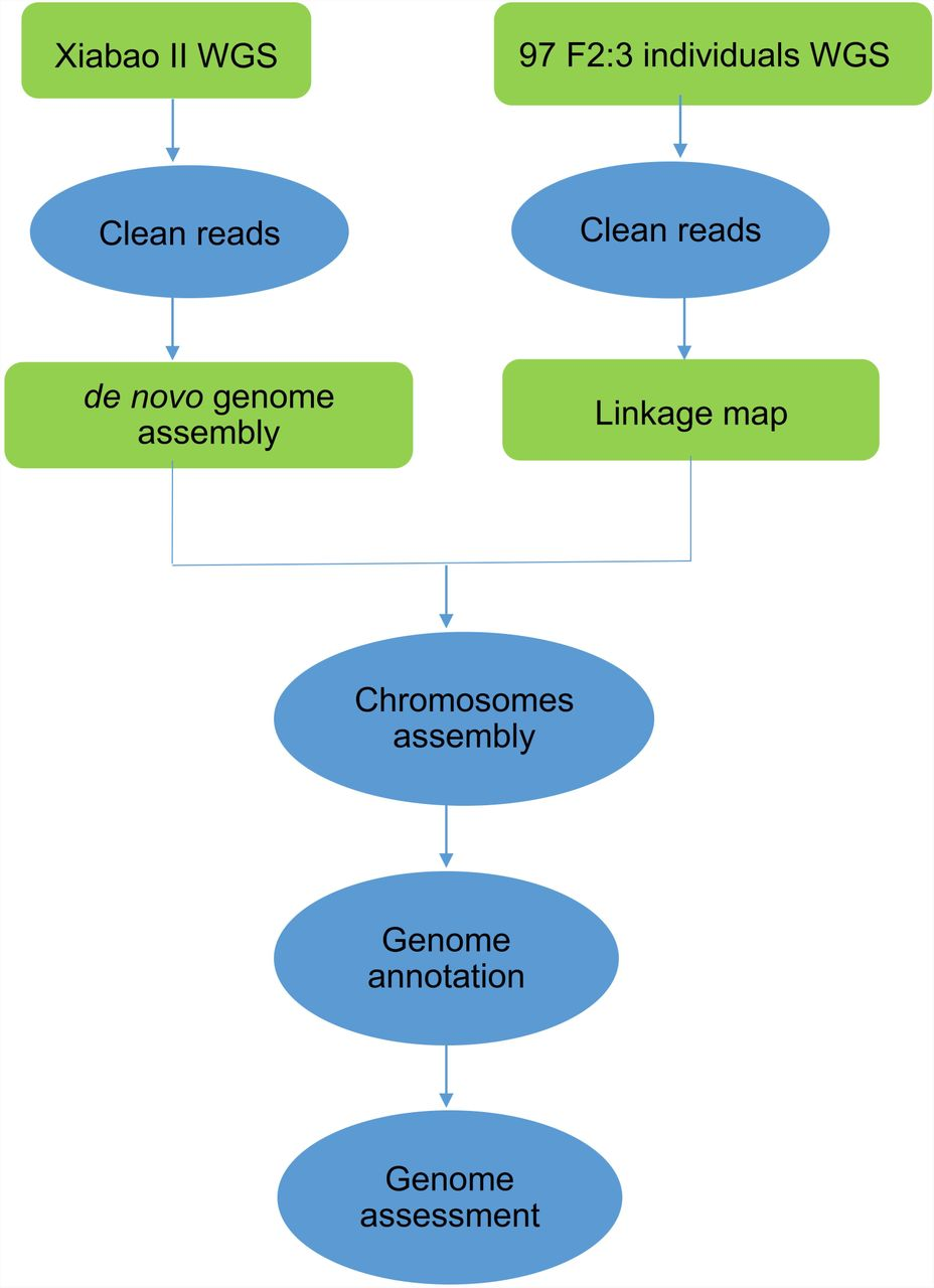 High-quality genome embly and high-density genetic map of ... on science map, chimpanzee genome project, life cycle map, building a linkage map, data map, brave new world map, nature map, genesis map, genome reference consortium, genetics map, environment map, yersinia pestis map, bovine genome, language map, west africa map, sci-fi map, dna map, ecology map, reference genome, immunity map, chromosome map, snp map, gene map, nucleic acid map,