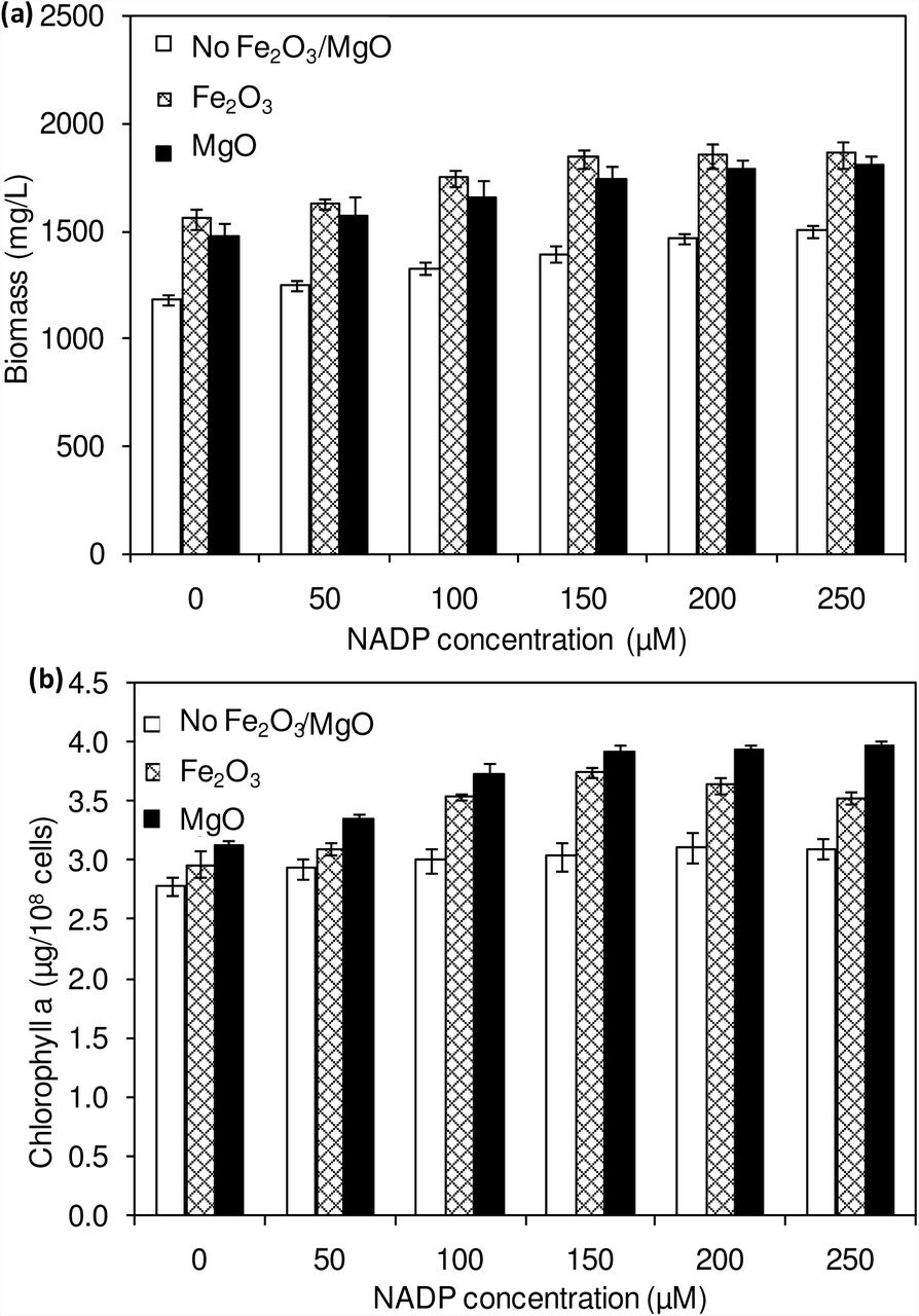 Effect of NADP concentration on biomass (a) and chlorophyll a (b) concentrations (conditions: cultivation time: 20 days; Fe 2 O 3 : 20 µM and MgO:200 µM).