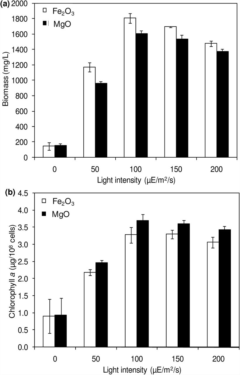 Effect of light intensity on biomass (a) and chlorophyll a (b) concentrations (conditions: cultivation time: 20 days; NADP: 150 µM; Fe 2 O 3 : 20 µM and MgO: 200 µM).