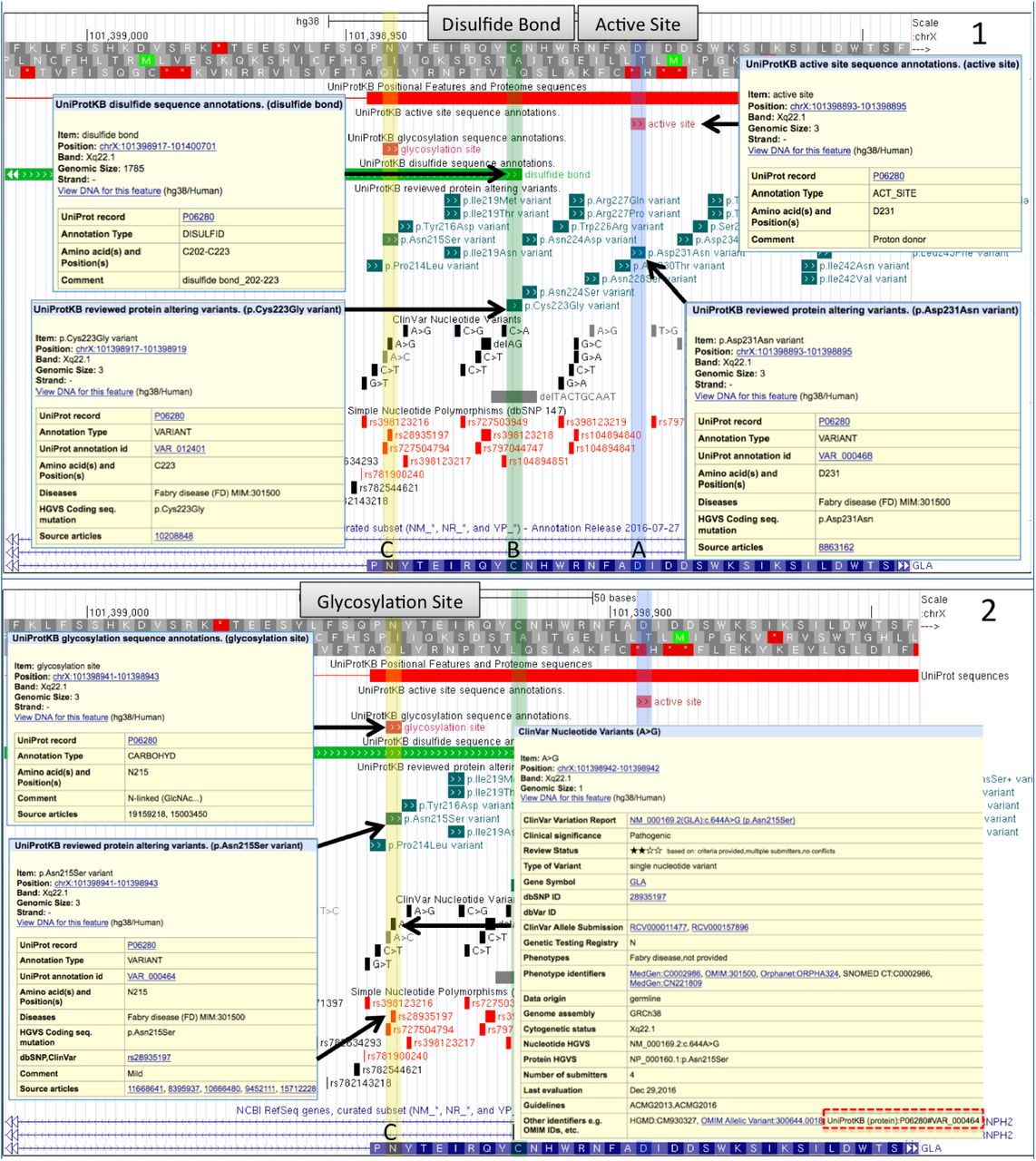 UniProt Genomic Mapping for Deciphering Functional Effects of