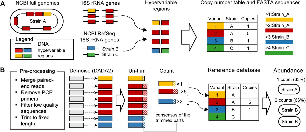 A high-resolution pipeline for 16S-sequencing identifies