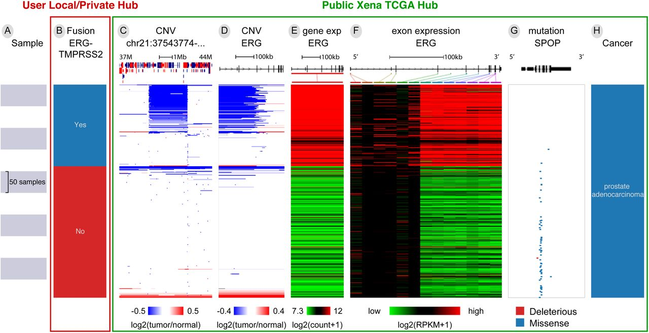 The UCSC Xena platform for public and private cancer