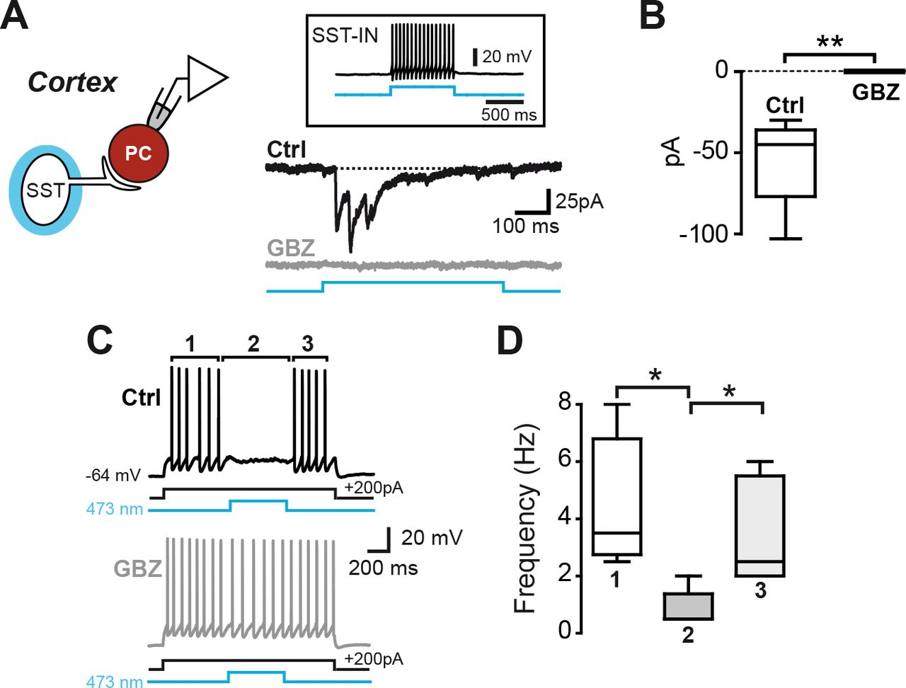 Somatostatin-Expressing Interneurons Co-Release GABA and Glutamate