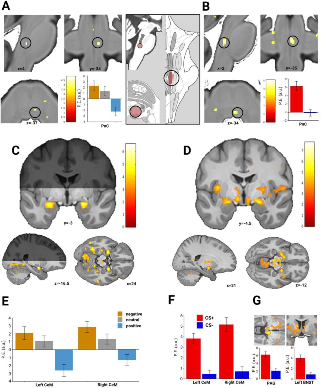 The neurofunctional basis of affective startle modulation in