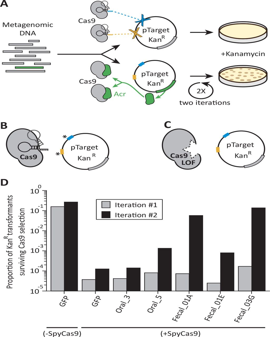 Functional metagenomics-guided discovery of potent Cas9