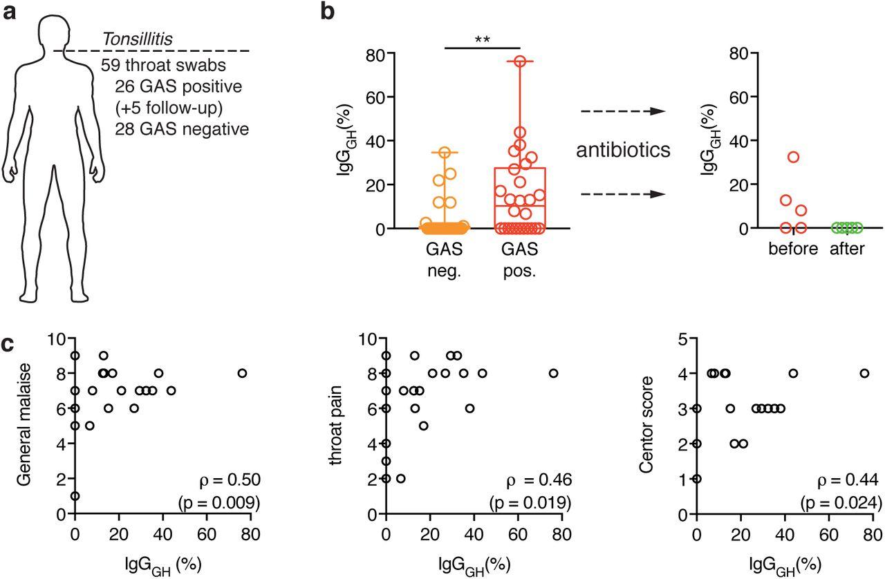 Sweet revenge - Streptococcus pyogenes showcases first