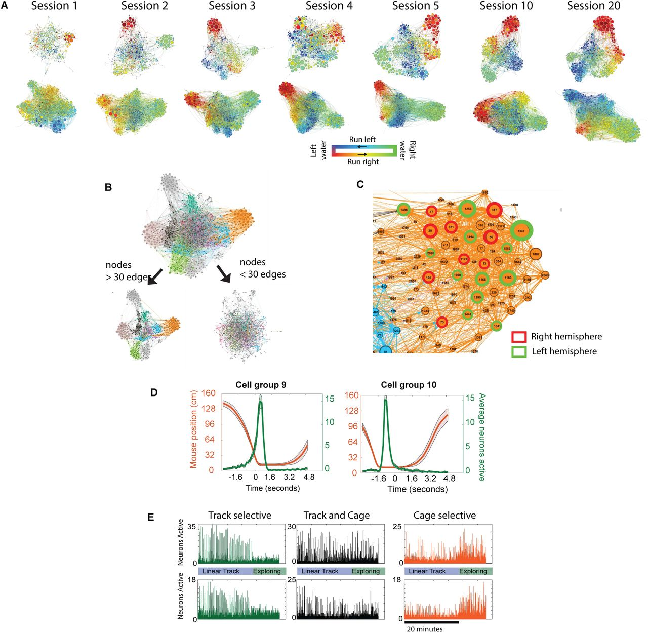 Persistence of neuronal representations through time and damage in