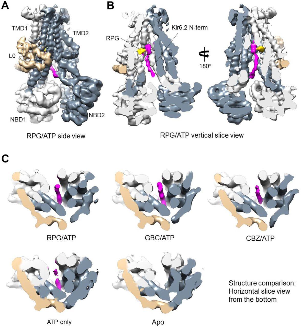 Mechanism of pharmacochaperoning in KATP channels revealed
