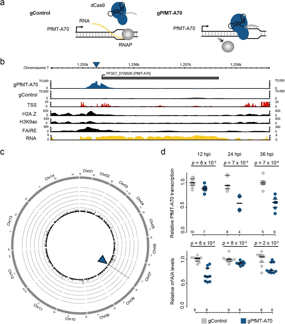 Transcriptome-wide dynamics of extensive m6A mRNA methylation during