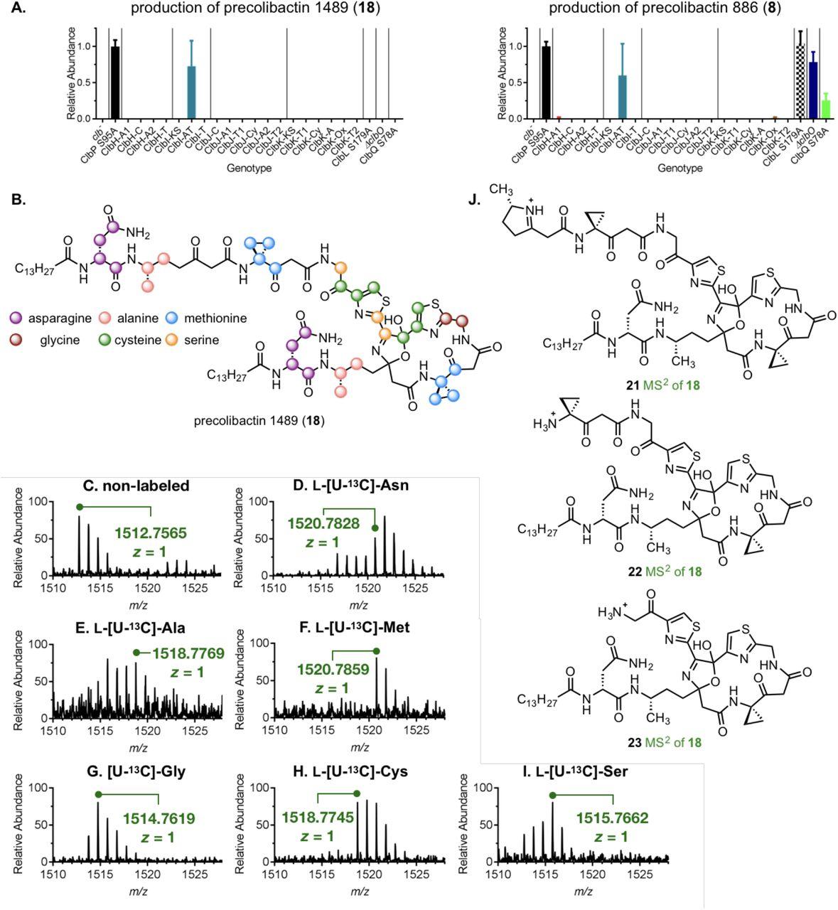 Structure elucidation of colibactin | bioRxiv