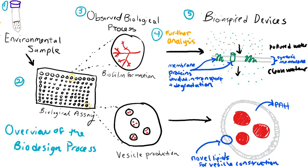 A high-throughput fluorescence-based assay for the detection