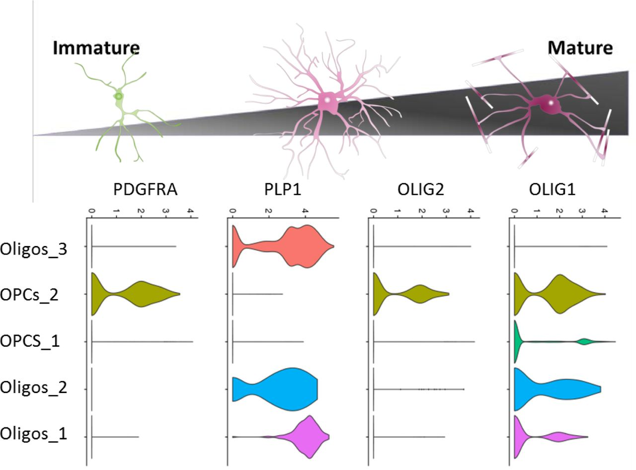 Single-nucleus RNA sequencing shows convergent evidence from