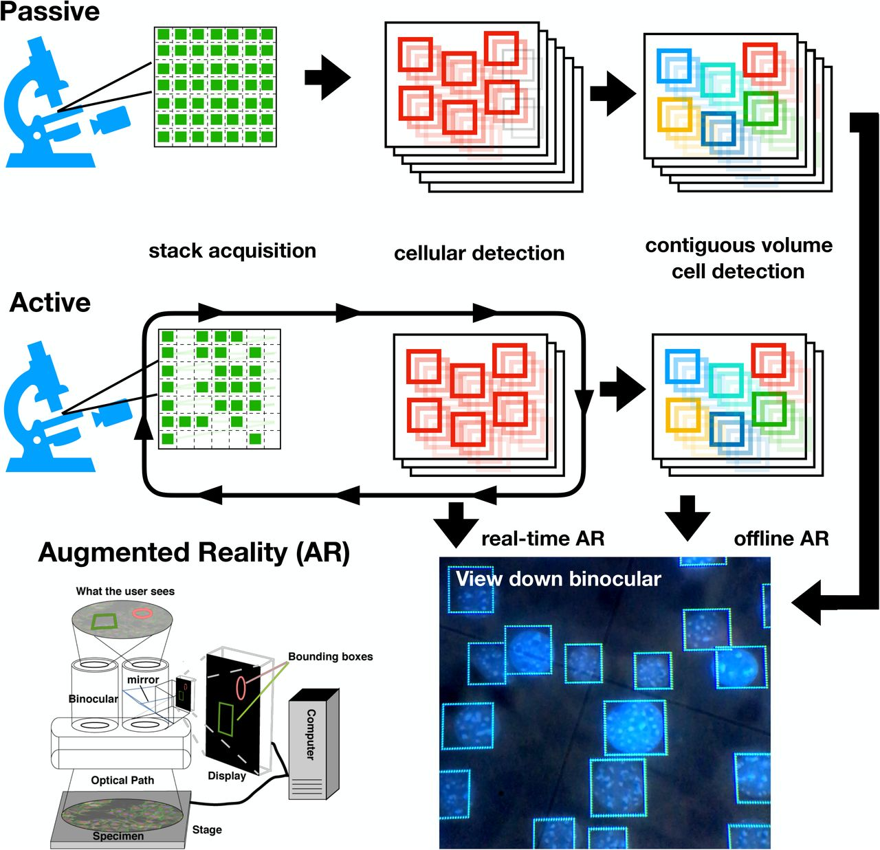 Object Detection Networks and Augmented Reality for Cellular