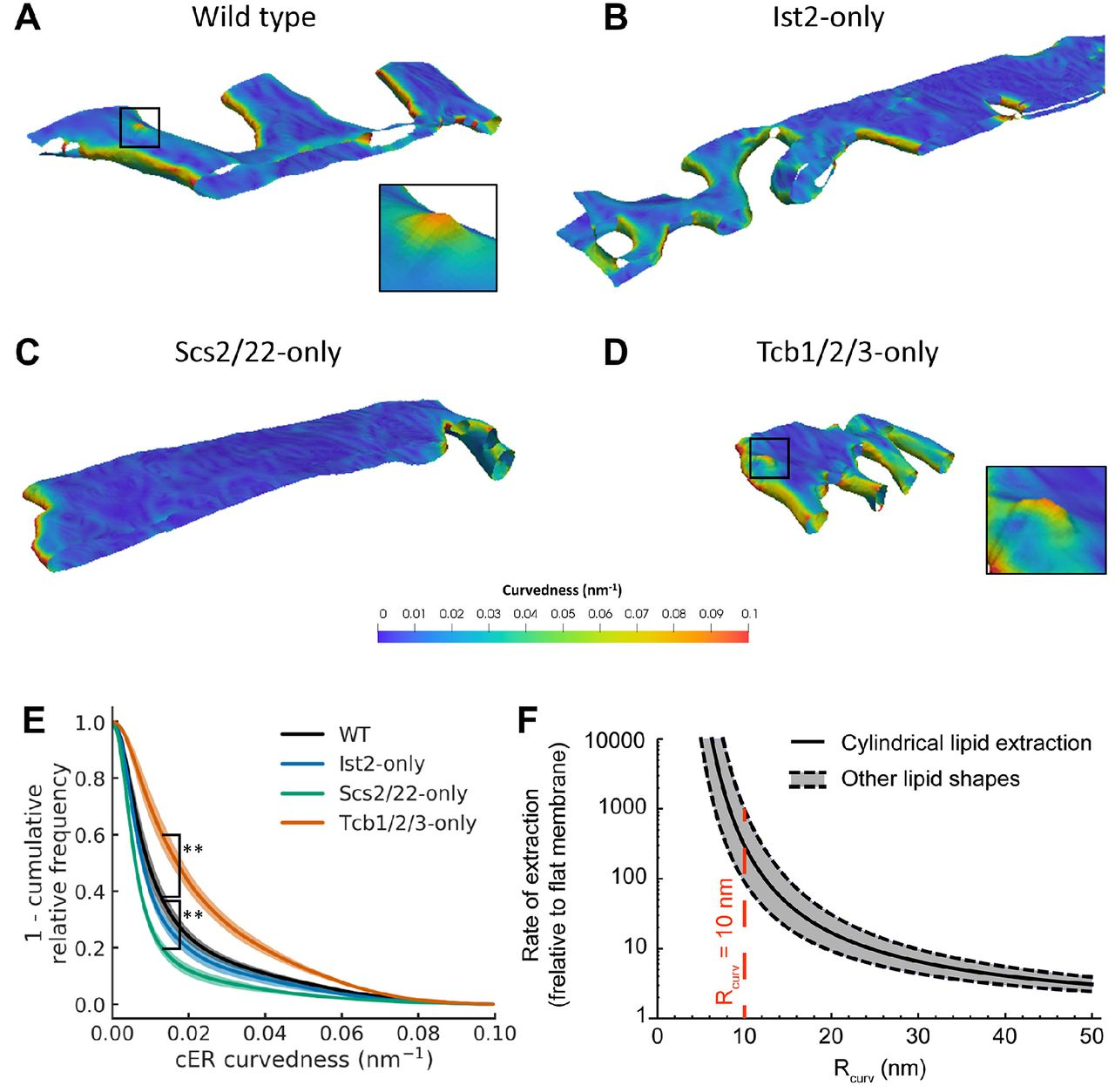 Tricalbin-mediated contact sites control ER curvature to