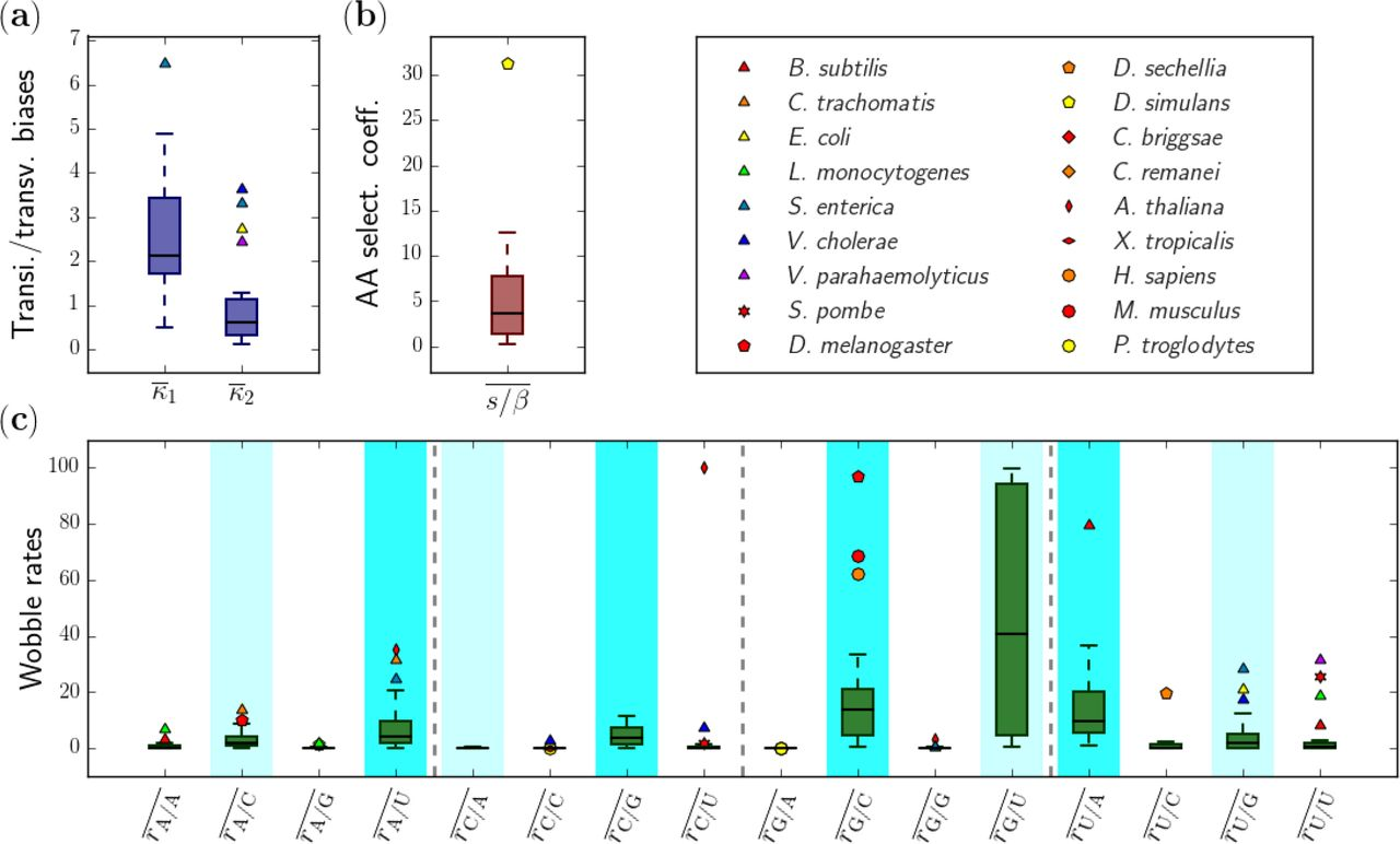 Inferring biophysical models of evolution from genome-wide