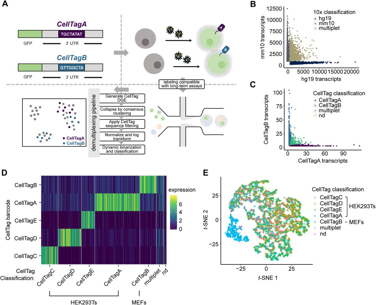 CellTag Indexing: genetic barcode-based sample multiplexing