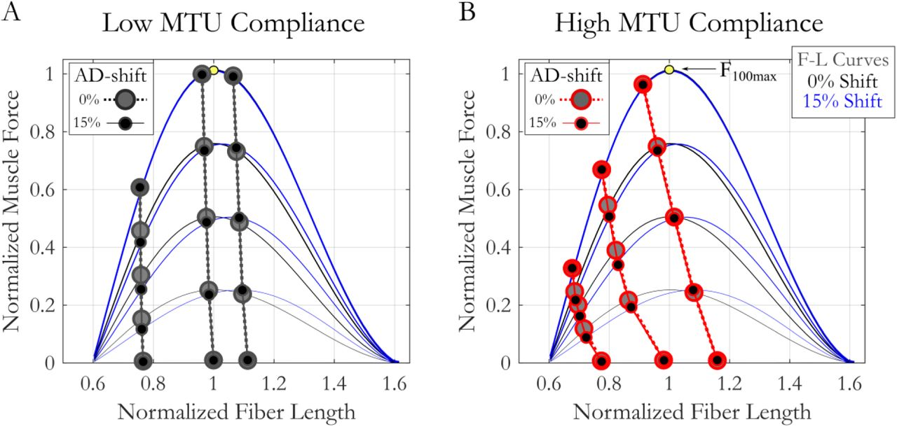 The interaction of compliance and activation on the force-length