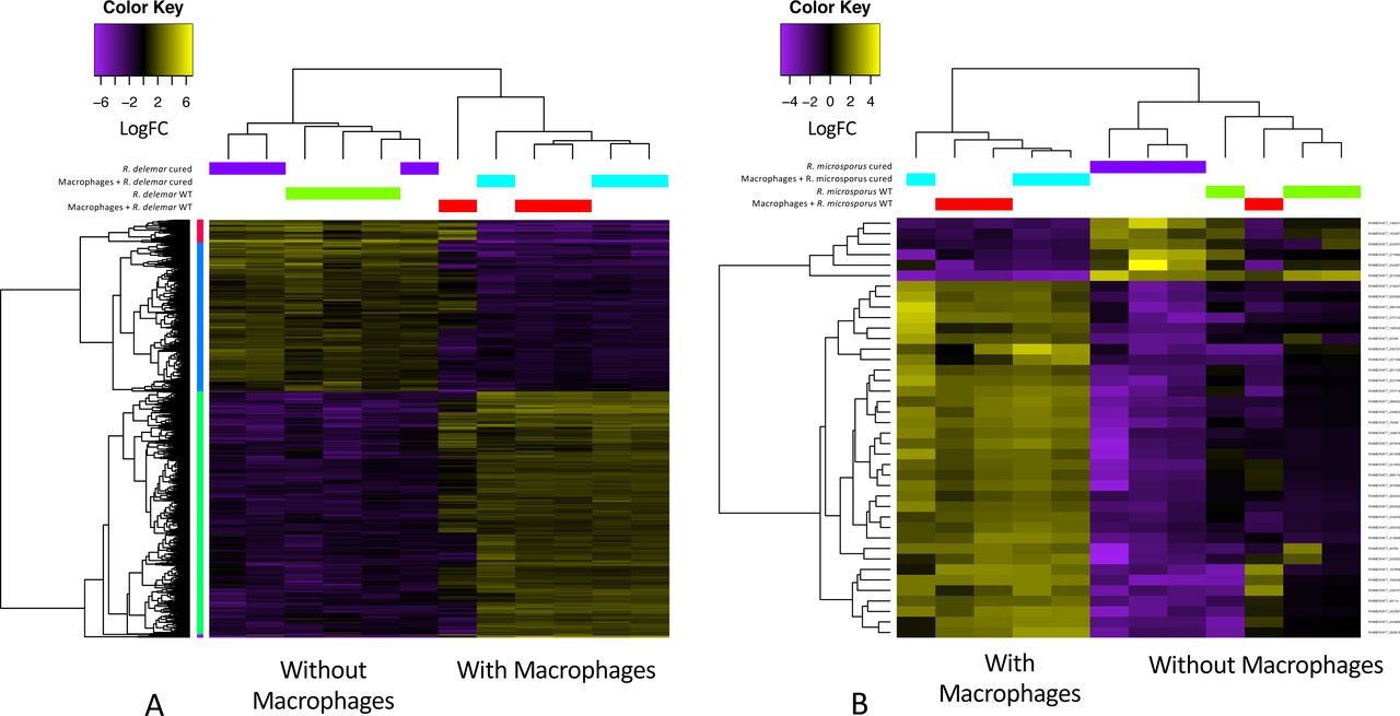 Host-pathogen transcriptomics of macrophages, Mucorales and their