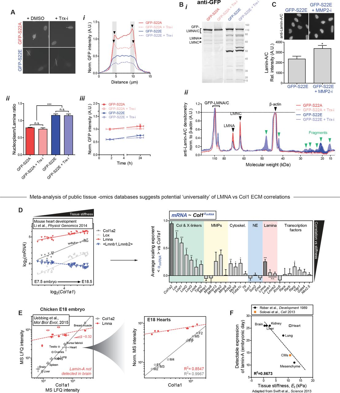 Mechanosensing by the lamina protects against nuclear