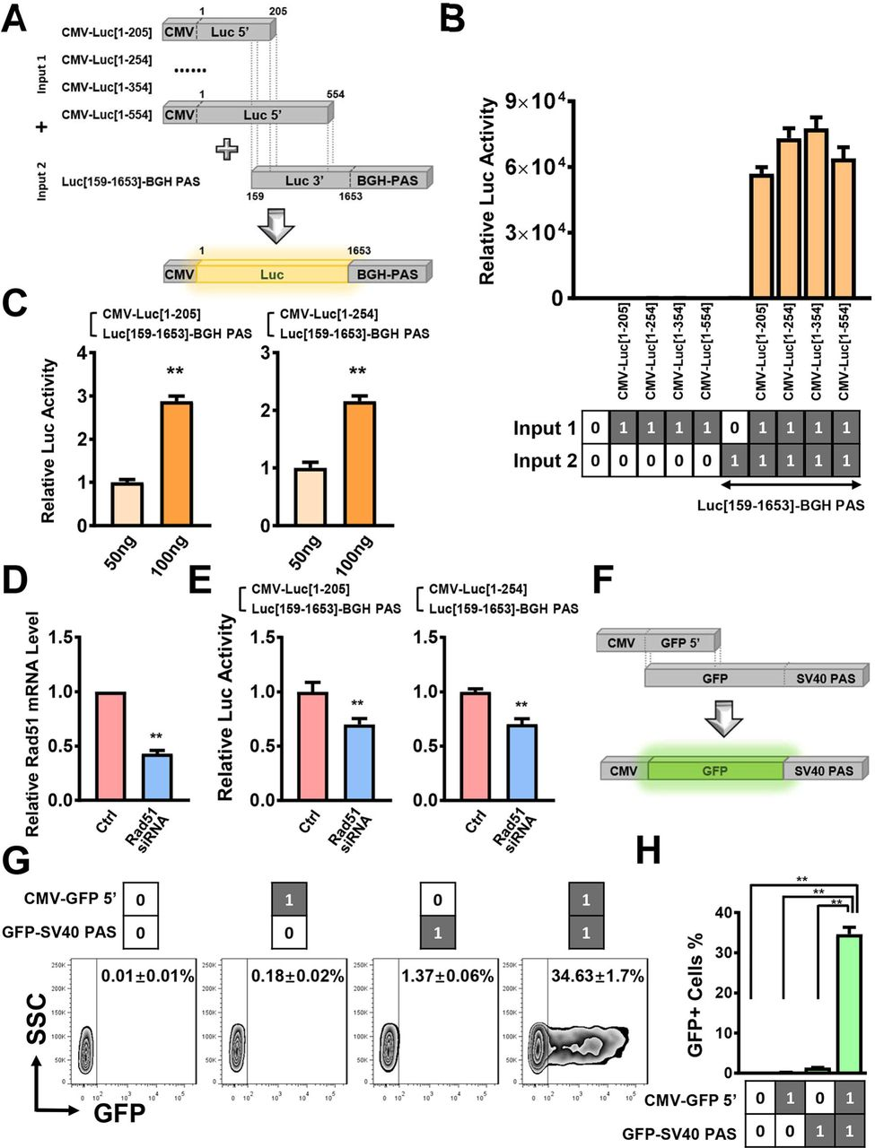 Linear Double Stranded Dnas As Innovative Biological Parts To Implement Genetic Circuits In Mammalian Cells Biorxiv