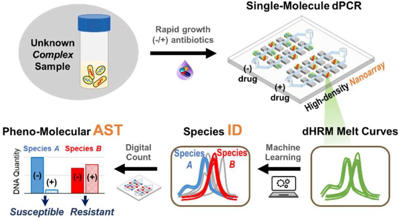 Machine Learning-Assisted Digital PCR and Melt Enables Broad