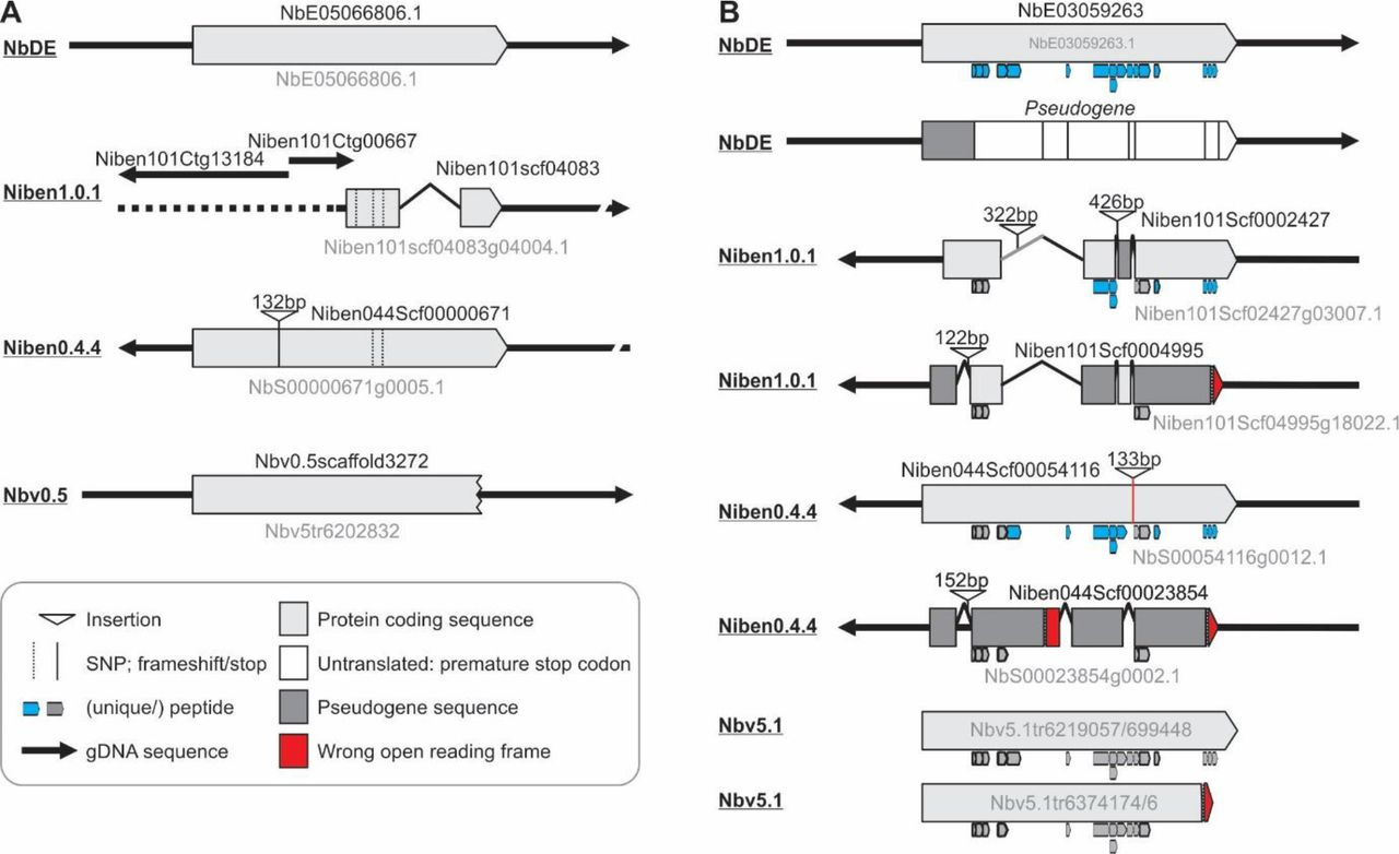 Homology-guided re-annotation improves the gene models of