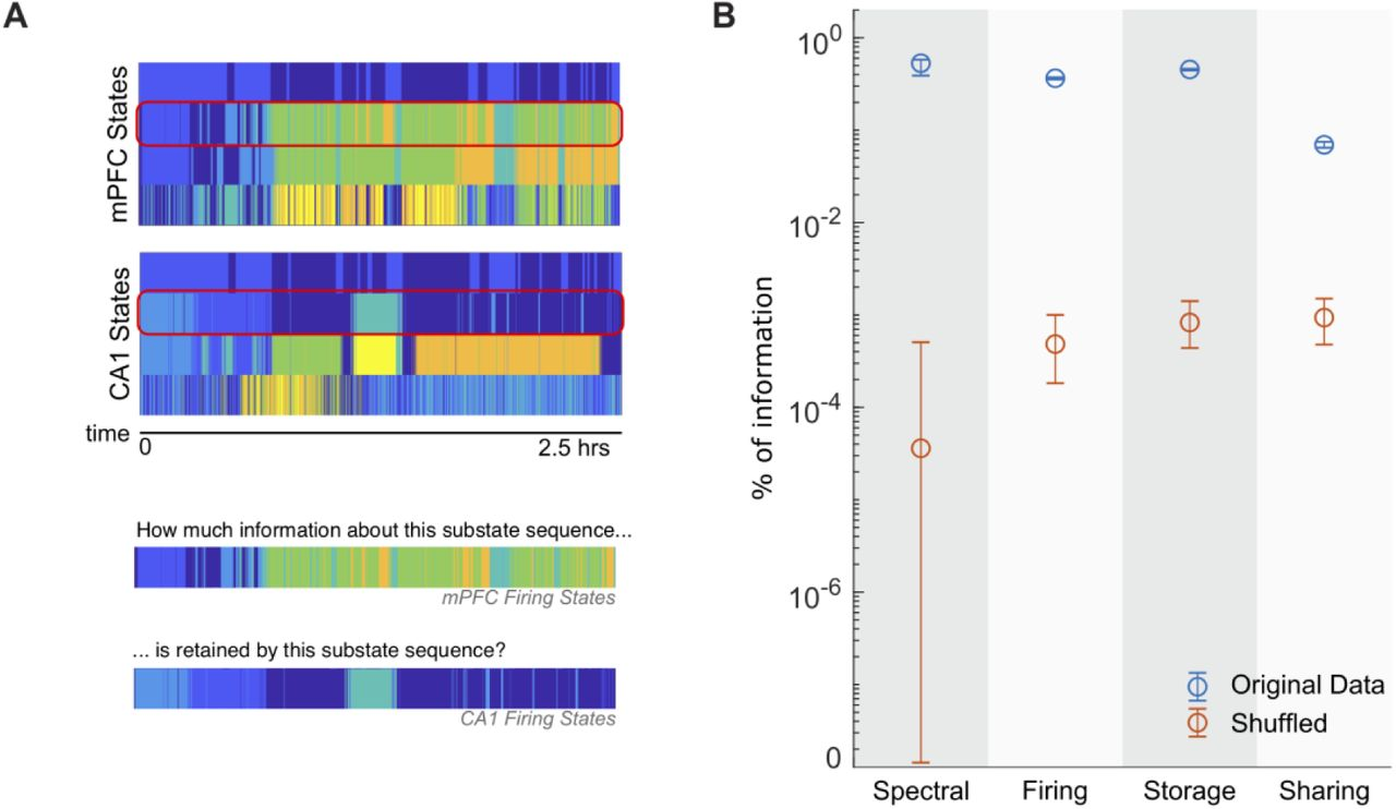 Computing Hubs in the Hippocampus and Cortex | bioRxiv