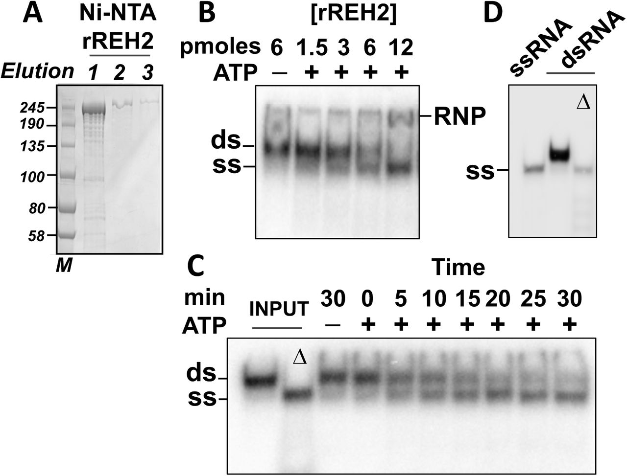 4f30e8065ed Protein features for assembly of the RNA editing helicase 2 ...
