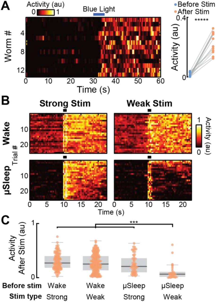 μSleep: A Spontaneous C  elegans Sleep State Regulated by Satiety