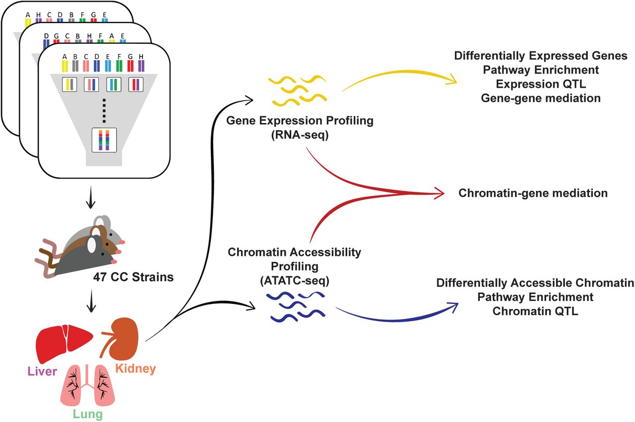 Integrative QTL analysis of gene expression and chromatin