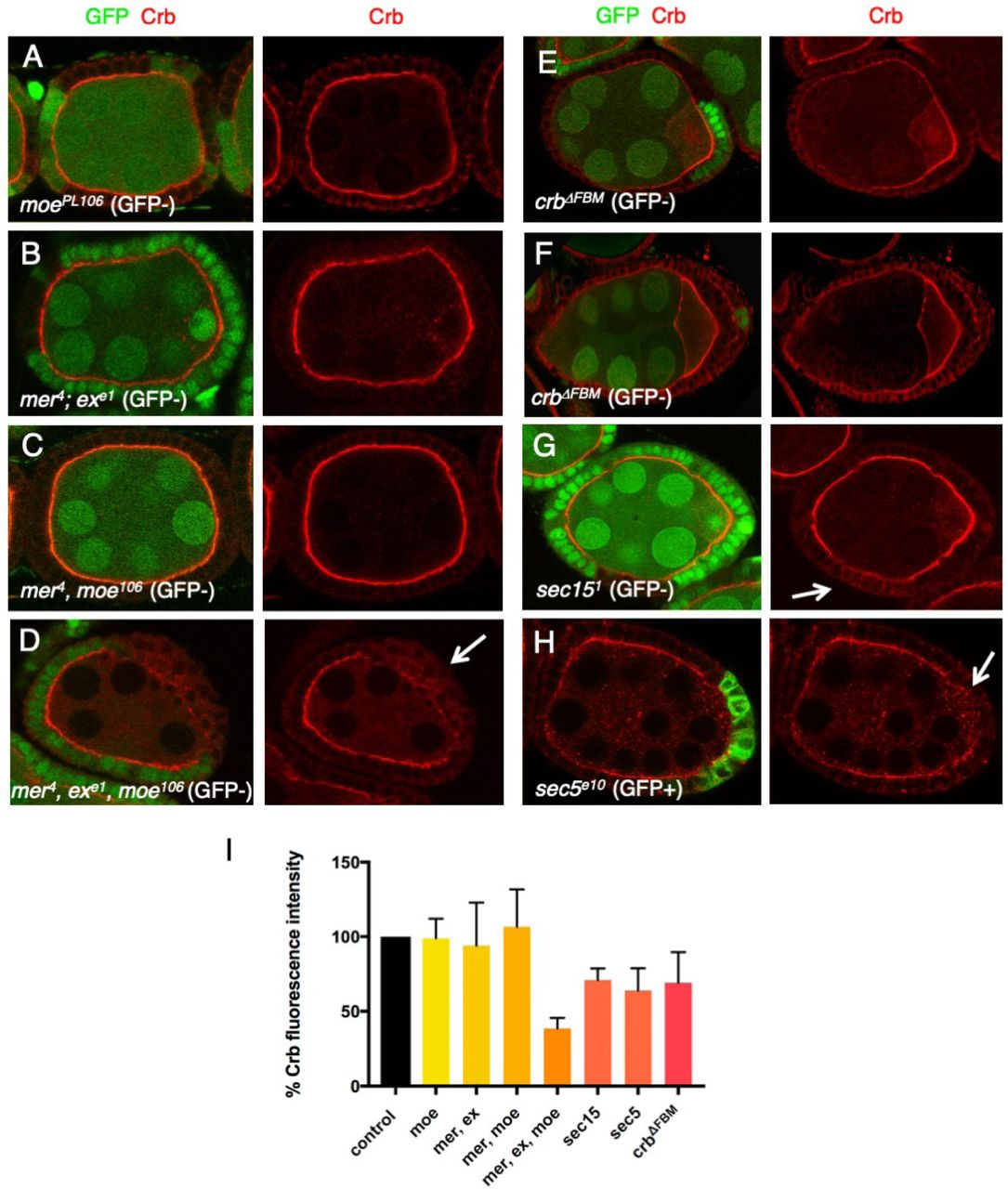 Apical transport of Crumbs maintains epithelial cell polarity | bioRxiv