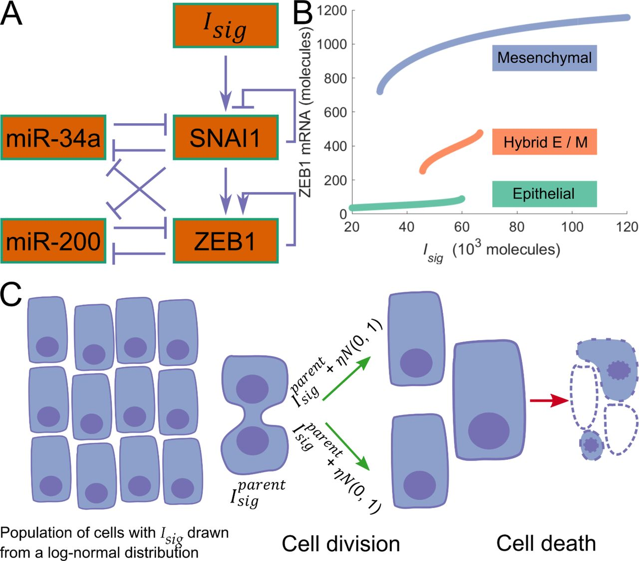A Mechanism for Epithelial-Mesenchymal Heterogeneity in a