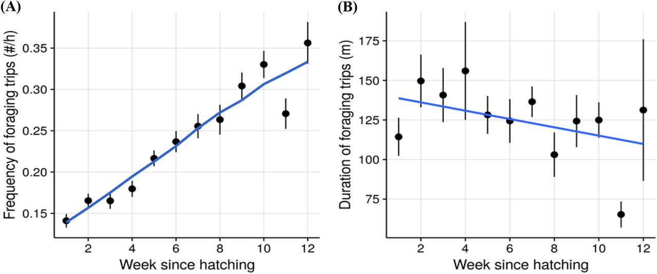Effect of Parental Care on Reproductive Success in Wood