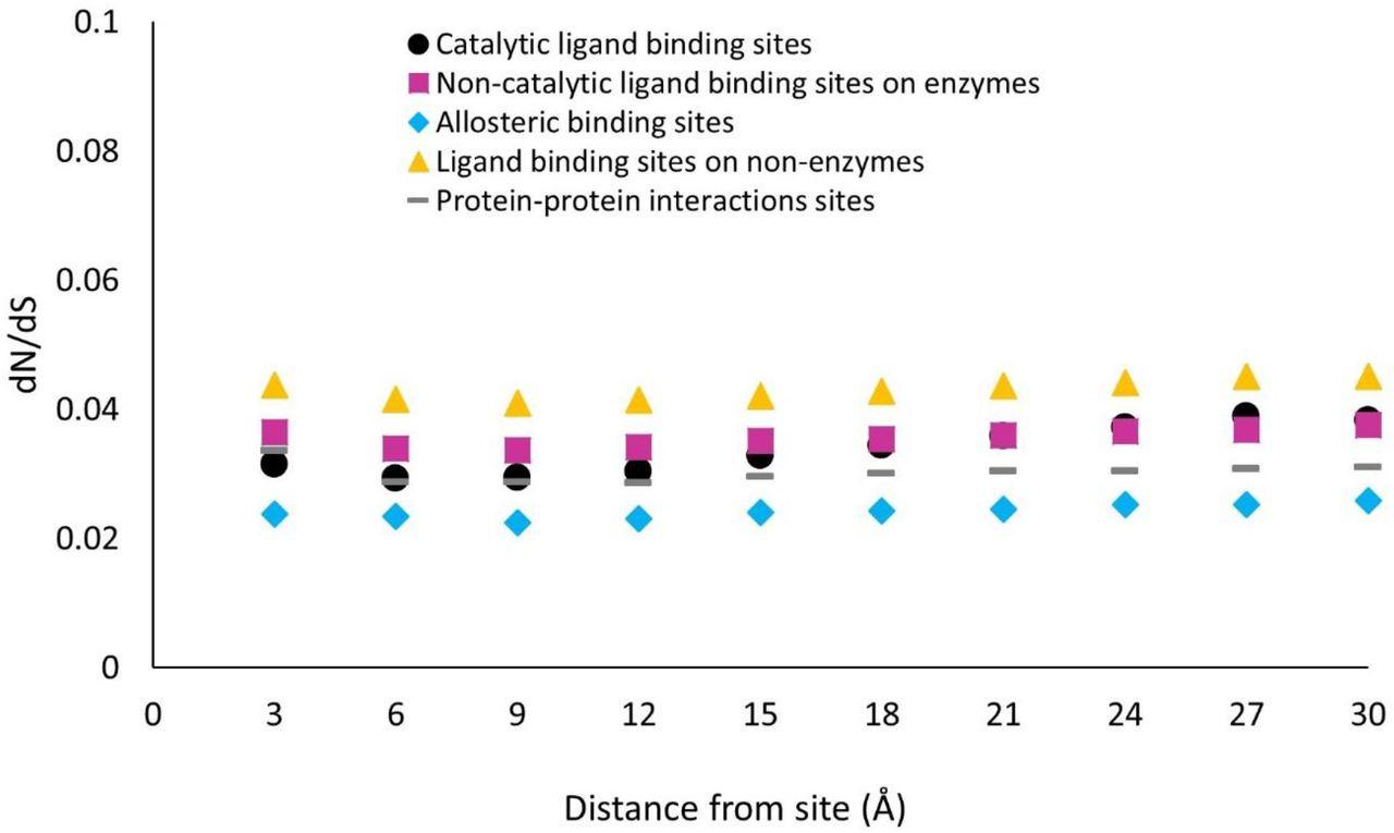 Non-catalytic binding sites induce weaker long-range evolutionary