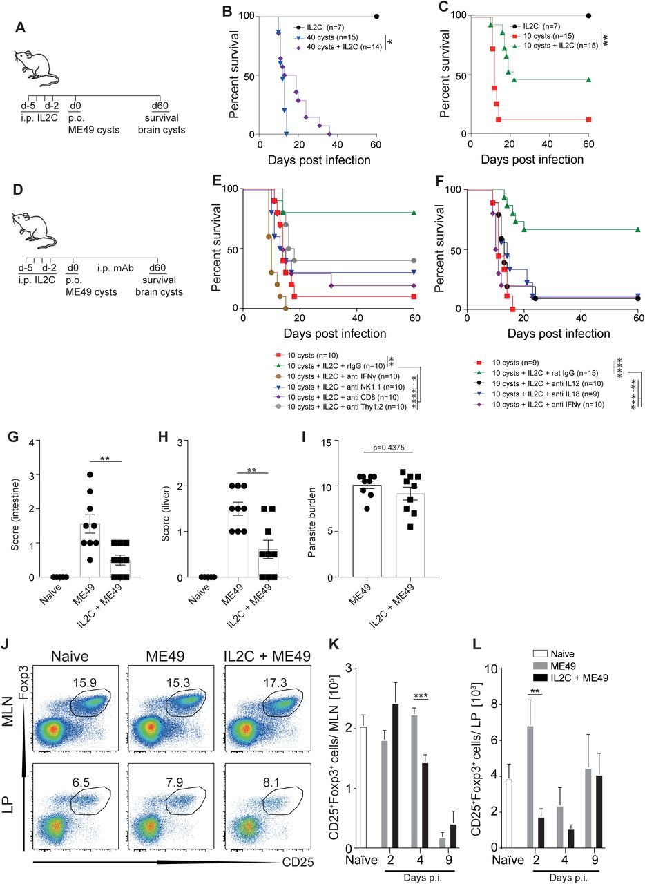 Treatment of mice with IL2-complex enhances inflammasome