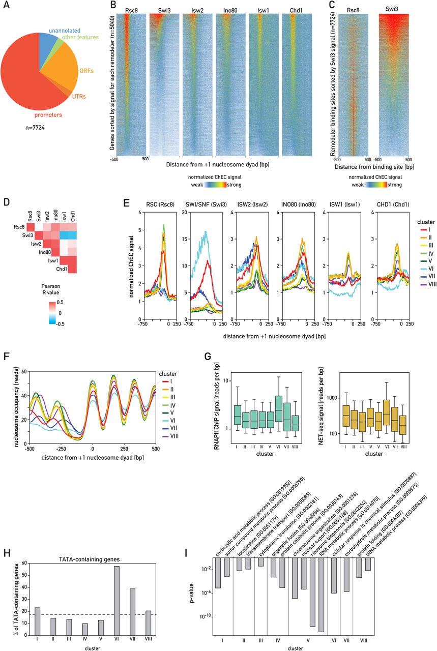 Opposing chromatin remodelers control transcription