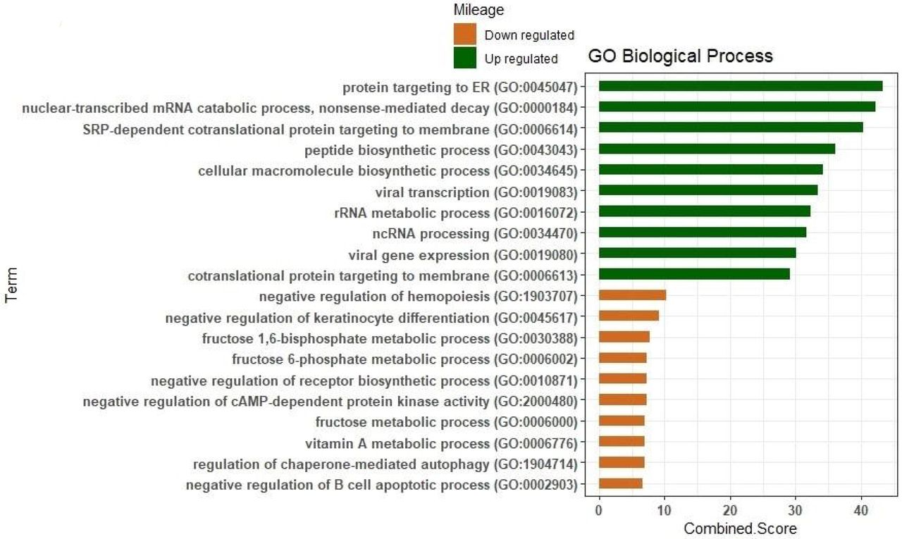 Gene expression profiles and pathway enrichment analysis to